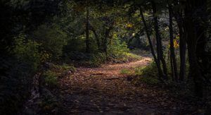 Deserted road in the woods - the road less traveled
