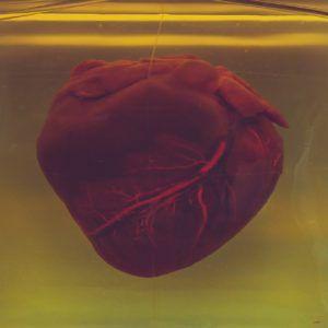 heart in a tank